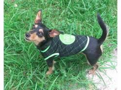 Calipso, chien