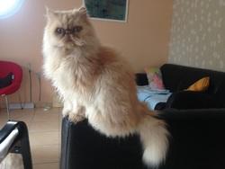 Camélia , chat