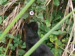 Caméo, chat Gouttière