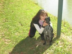 Caméron, chien Berger australien
