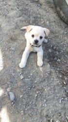 Camie, chien