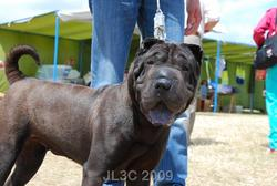Campbell, chien Shar Pei