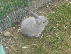 Canaille, rongeur Lapin