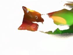 Canel, chat Européen