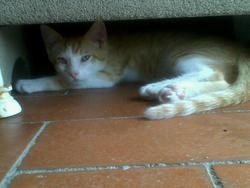 Canel, chat Gouttière