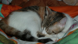 Canelle, chat