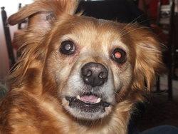 Canelle, chien