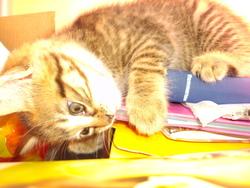 Canette, chat Gouttière