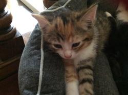 Cannel, chat Gouttière