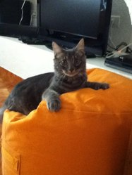 Cannel, chat