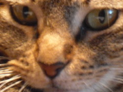Cannelle, chat Gouttière