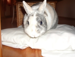 Cannelle, rongeur Lapin