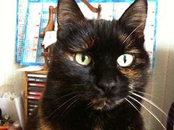 Cantor, chat Gouttière