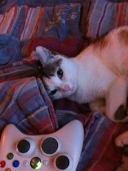 Capsule , chat Gouttière