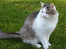Capsule, chat Gouttière
