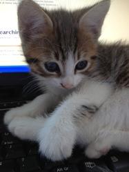 Capuche, chat Gouttière