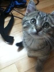 Capuche, chat
