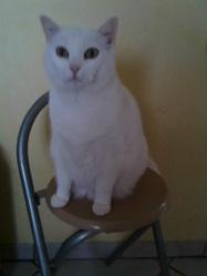 Capucine, chat Gouttière