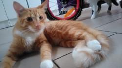 Caramel, chaton
