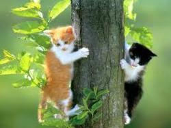 Caramel Et Bouillon, chat