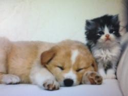 Caramel Et Oreo, chien