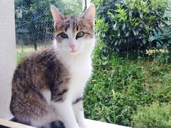 Caramelle, chat Gouttière