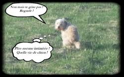 Caramelle, chien