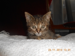 Caramelle, chat