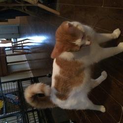 Caramells, chat Gouttière