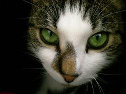 Carla, chat Gouttière
