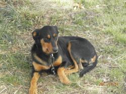 Carlos, chien