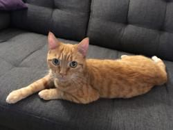 Carmen, chat Gouttière
