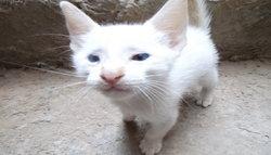 Carmiloo, chat Gouttière