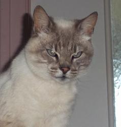 Caro, chat Gouttière