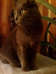 Carole, chat Gouttière