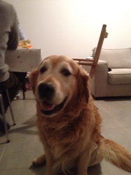 Carotte, chien