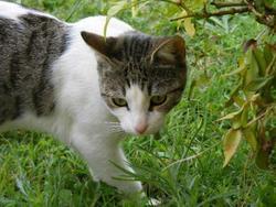 Cary, chat Gouttière