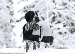 Casandra Mon Tresore D'Amoure, chien Braque d'Auvergne