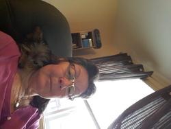 Cashew, chien Yorkshire Terrier