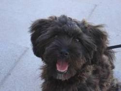Casimir, chien