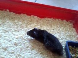 Casper Au Paradis Des Hamster, rongeur Hamster