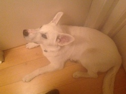 Casper, chien