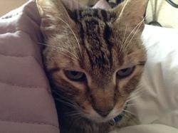 Casper, chat Gouttière