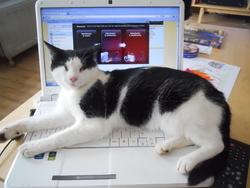 Cassic, chat Gouttière