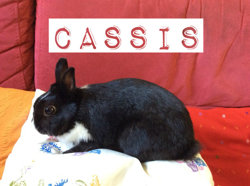 Cassis, rongeur Lapin