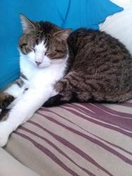 Cassis, chat Gouttière