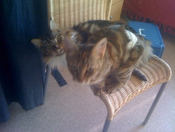 Cassy, chat Gouttière