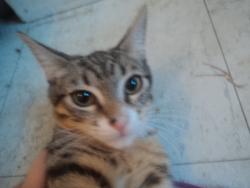 Castiel, chat Gouttière