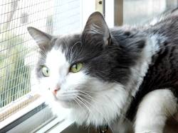 Catnip, chat Gouttière