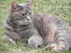 Causette, chat Gouttière